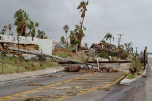 Landscape destroyed by hurricane