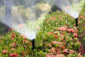best irrigation practices