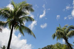 plant these summer palms